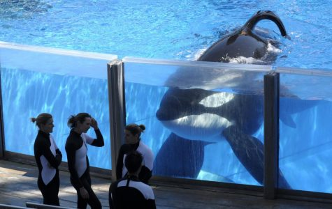 Sea World faces controversy