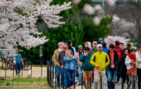 Tourists gather in crowds in Washington D.C. on March 26 despite social distancing guidelines from the city.